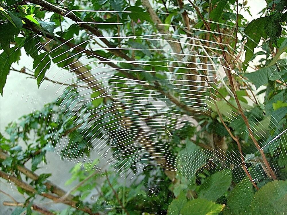 Spider web by Ana Belaj