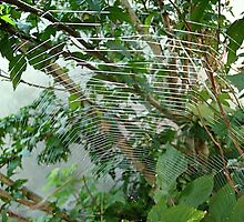 Spider web by Ana Belaj