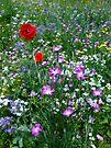 Wild flower Meadow by inkedsandra