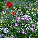Wild flower Meadow by inkedsandra