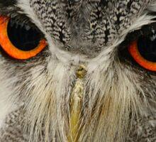 Fierce Little Owl Sticker