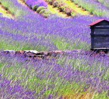 Lavender Farm 2013 Sticker