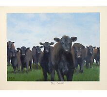 9 black cows: the Court Photographic Print