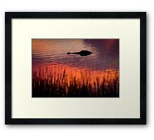 Alligator at Sunset in Florida Framed Print