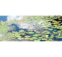 Daydreams and Lily Ponds Photographic Print