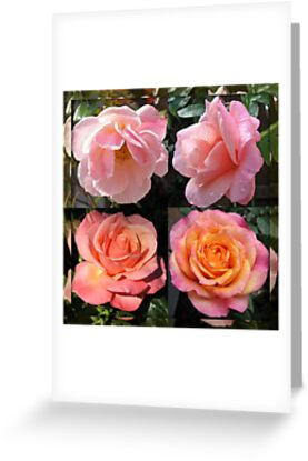 Admiring Their Reflections - Rose Beauties in Mirrored Frame by BlueMoonRose