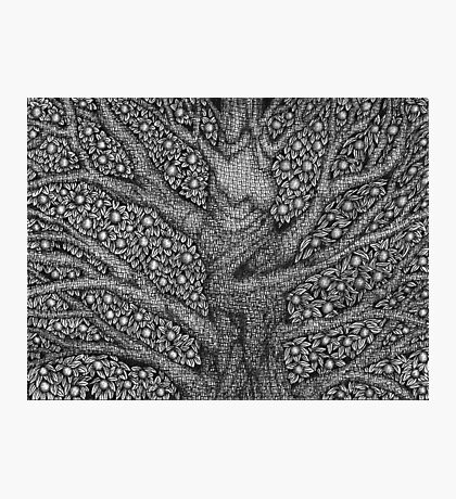 Witch and Wizard Tree Photographic Print