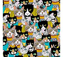 The boring Cats Photographic Print