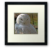 """ SNOWY OWL"" Framed Print"