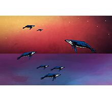 Flying Whales  Photographic Print