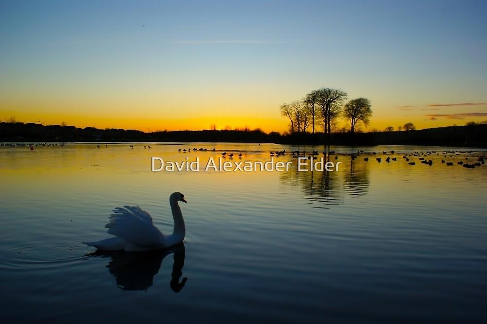 Swan Loch by David Alexander Elder