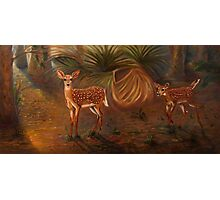 Fawns in the forest Photographic Print