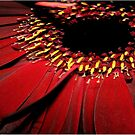 red petals  by paula cattermole artinapuddle