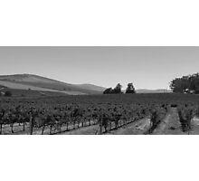 Vineyard Photographic Print