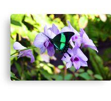 Aruba Butterfly Farm II Canvas Print