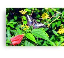 Aruba Butterfly Farm III Canvas Print