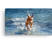Isabella Breaking The Water Barrier Canvas Print