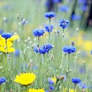 Cornflowers and Daisies by Karen E Camilleri