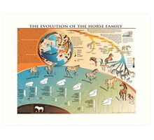 Horse Evolution Art Print