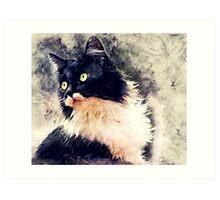 Cat Lola Art Print