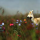 Roe in a Meadow by Hannah Joy Patterson