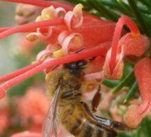 Nectar collector Sticker