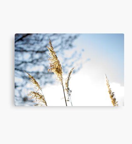 Vanilla Sunset Canvas Print