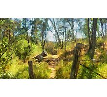 Bush Track Photographic Print