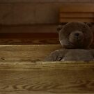 Teddy On The Bench.   by FoodMaster