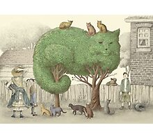 The Night Gardener - The Cat Tree Photographic Print
