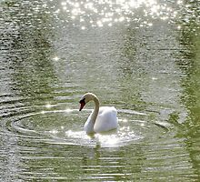 Sparkly Swan by Astrid Ewing Photography