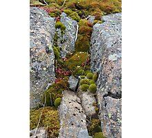 Small World I Photographic Print