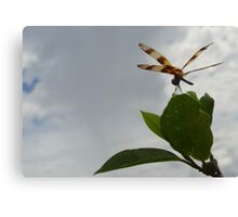 Dragonfly on Mangrove Photo Canvas Print