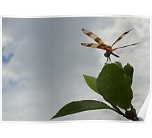 Dragonfly on Mangrove Photo Poster