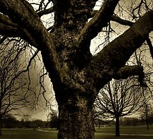 Haunted Tree by Vicki Spindler (VHS Photography)