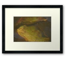 water lily pad by bs hilton Framed Print