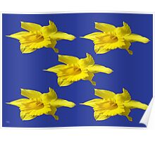 DAFFODILS ON BLUE Poster