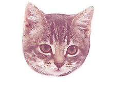 Swaggy Cute Kitten  Photographic Print