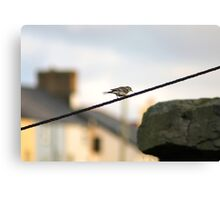 Wagtail on a wire Canvas Print