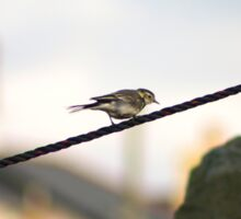 Wagtail on a wire Sticker