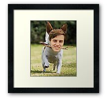 Gus the Jack Russell with a stick Framed Print