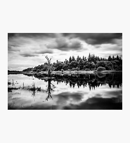 Flooded River Photographic Print