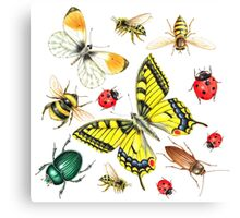 set of watercolor insects Canvas Print