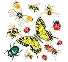 set of watercolor insects Photographic Print