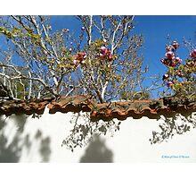 Sensory Garden Old Monterey Photographic Print