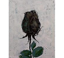 Black Rosebud Photographic Print