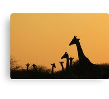 Giraffe Silhouette - African Wildlife Background - Colors in Nature Canvas Print