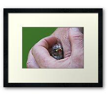 A Bird in the Hand..... Framed Print
