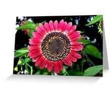Dark Red Sunflower Greeting Card