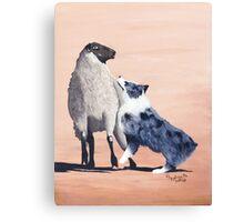 One Tough Sheepdog Australian Shepherd Canvas Print